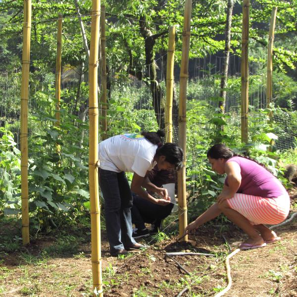 Desarrollo de Escuela de Campo Agricola(ECA) Chilamo, San Antonio. - AACID