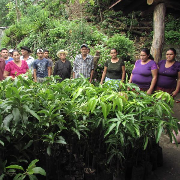 Entrega de Arboles frutales para establecimiento de PIF Volcancillo, Carolina - AACID