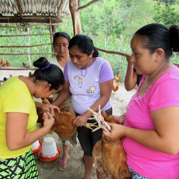 Potenciado el rol de la mujer mediante iniciativas productivas. Campaña de vacunación de aves.
