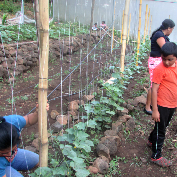 Escuela de Campo con agricultores/as –ECA-.