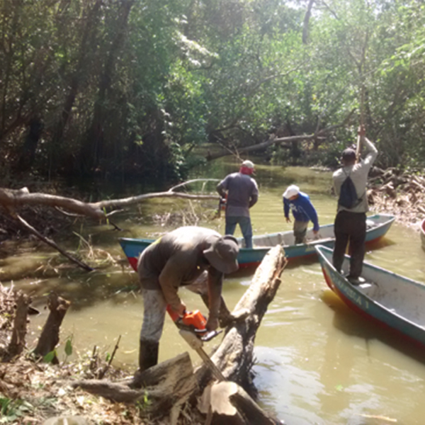 "Implementación de la técnica ""Restauración Ecológica de Manglar (REM)"" con las comunidades"