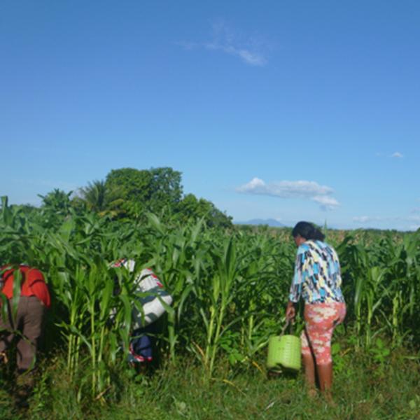 Escuela de Campo (ECA) de comunidad Brisas de Jaltepeque