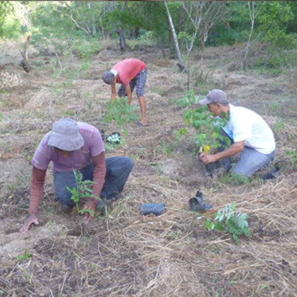 Campaña de reforestación del Área Natural Protegida Complejo Escuintla